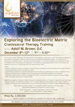 Exploring the Bioelectric Matrix